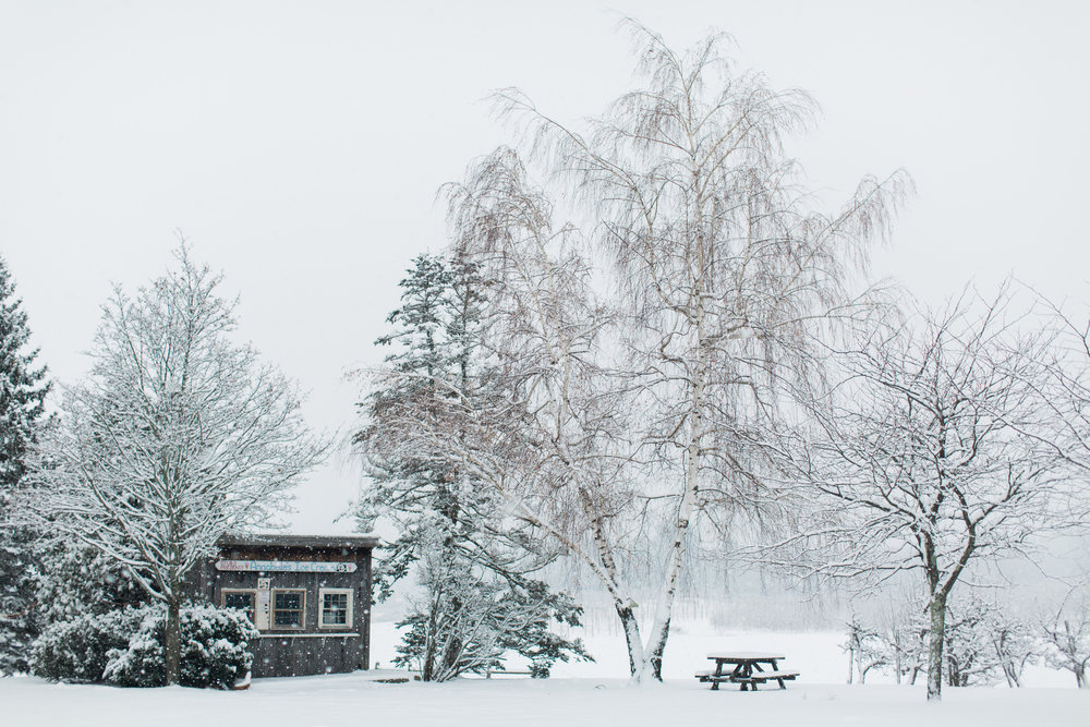 CindyGiovagnoli_New_Hampshire_New_England_snow_winter-020.jpg