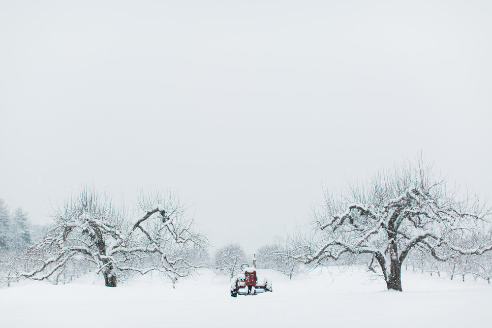 CindyGiovagnoli_New_Hampshire_New_England_snow_winter-021.jpg