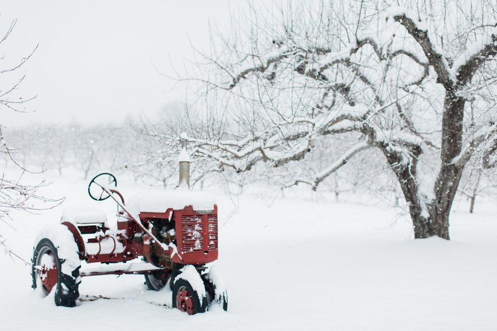 CindyGiovagnoli_New_Hampshire_New_England_snow_winter-026.jpg