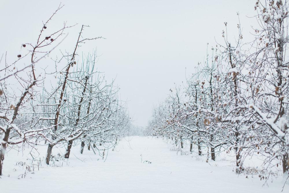 CindyGiovagnoli_New_Hampshire_New_England_snow_winter-027.jpg
