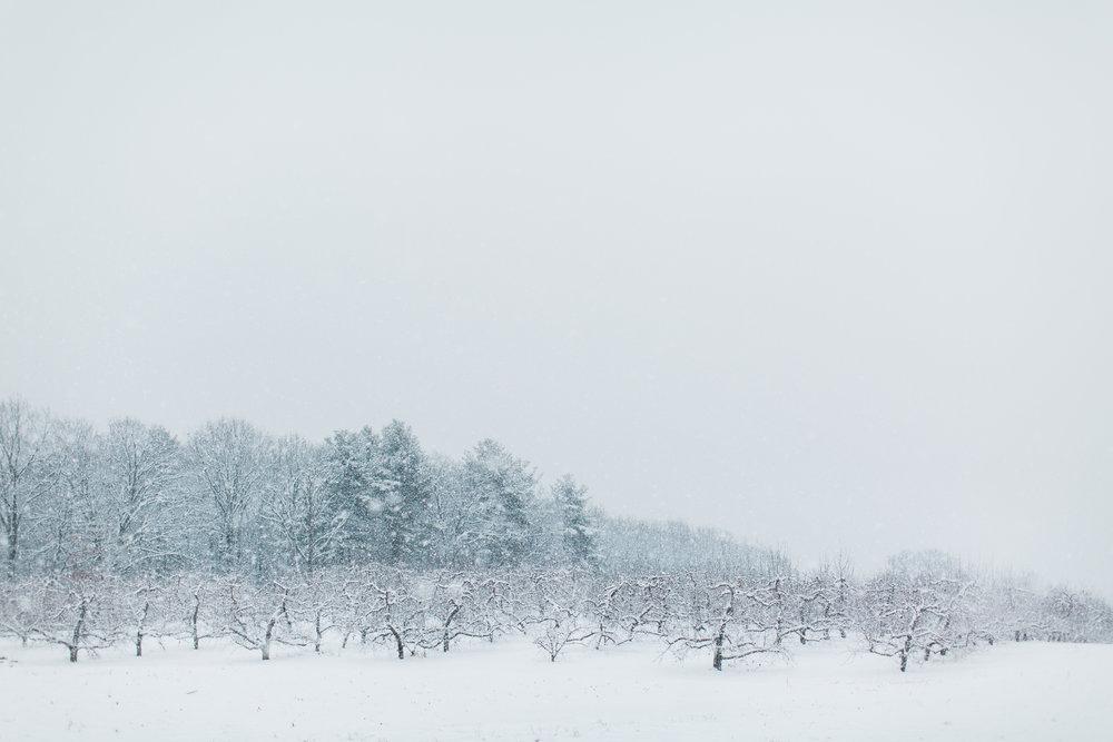CindyGiovagnoli_New_Hampshire_New_England_snow_winter-028.jpg