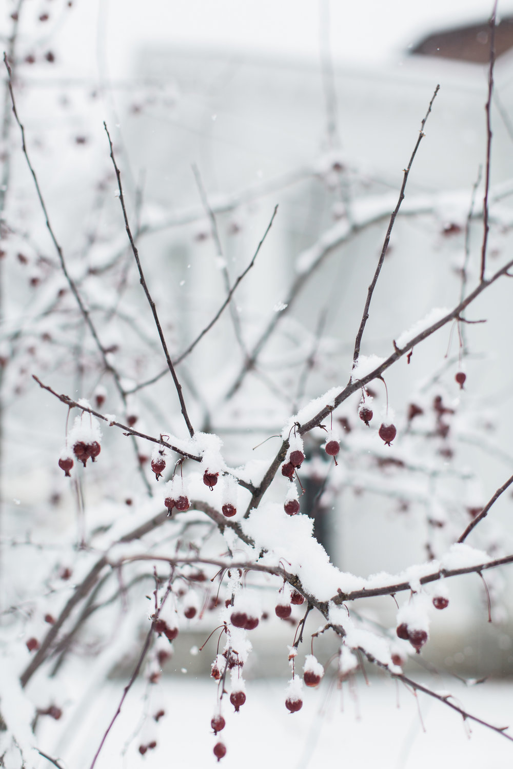 CindyGiovagnoli_New_Hampshire_New_England_snow_winter-030.jpg