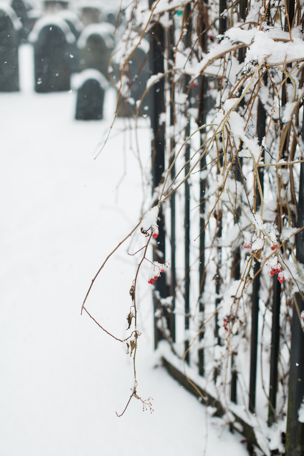 CindyGiovagnoli_New_Hampshire_New_England_snow_winter-031.jpg