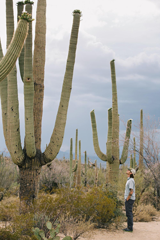 CindyGiovagnoli_Saguaro_National_Park_Tucson_Arizona_flowers_rain_spring_desert-001.jpg