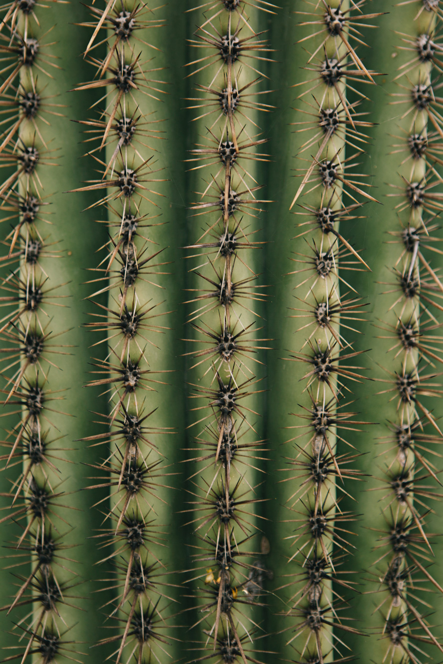 CindyGiovagnoli_Saguaro_National_Park_Tucson_Arizona_flowers_rain_spring_desert-003.jpg