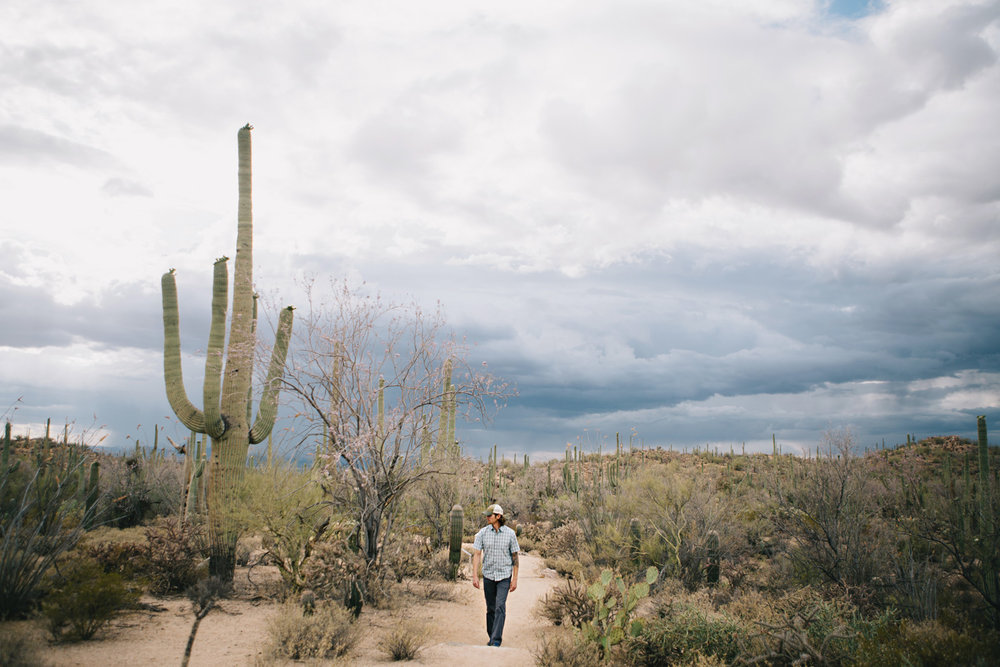 CindyGiovagnoli_Saguaro_National_Park_Tucson_Arizona_flowers_rain_spring_desert-005.jpg
