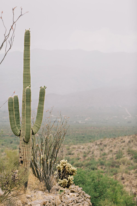 CindyGiovagnoli_Saguaro_National_Park_Tucson_Arizona_flowers_rain_spring_desert-011.jpg