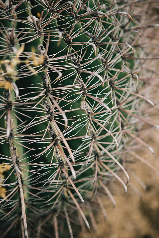 CindyGiovagnoli_Saguaro_National_Park_Tucson_Arizona_flowers_rain_spring_desert-012.jpg