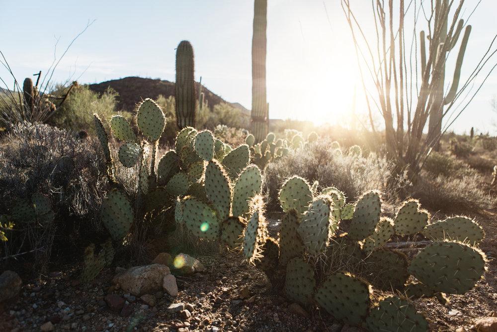 CindyGiovagnoli_Tucson_Arizona_desert_life.jpg