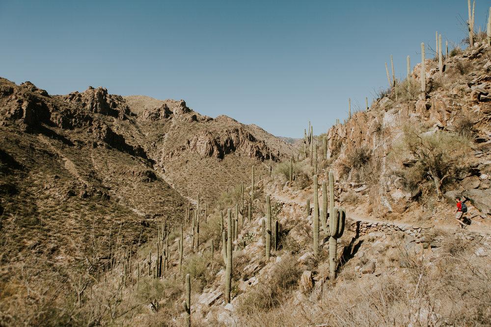 CindyGiovagnoli_Tucson_Arizona_Sabino_Canyon_Phone_Line_Trail_Uinta_Brewing_saguaro_cactus_desert_hiking-002.jpg