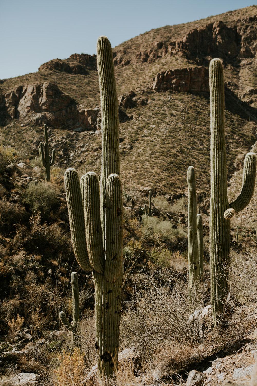 CindyGiovagnoli_Tucson_Arizona_Sabino_Canyon_Phone_Line_Trail_Uinta_Brewing_saguaro_cactus_desert_hiking-004.jpg