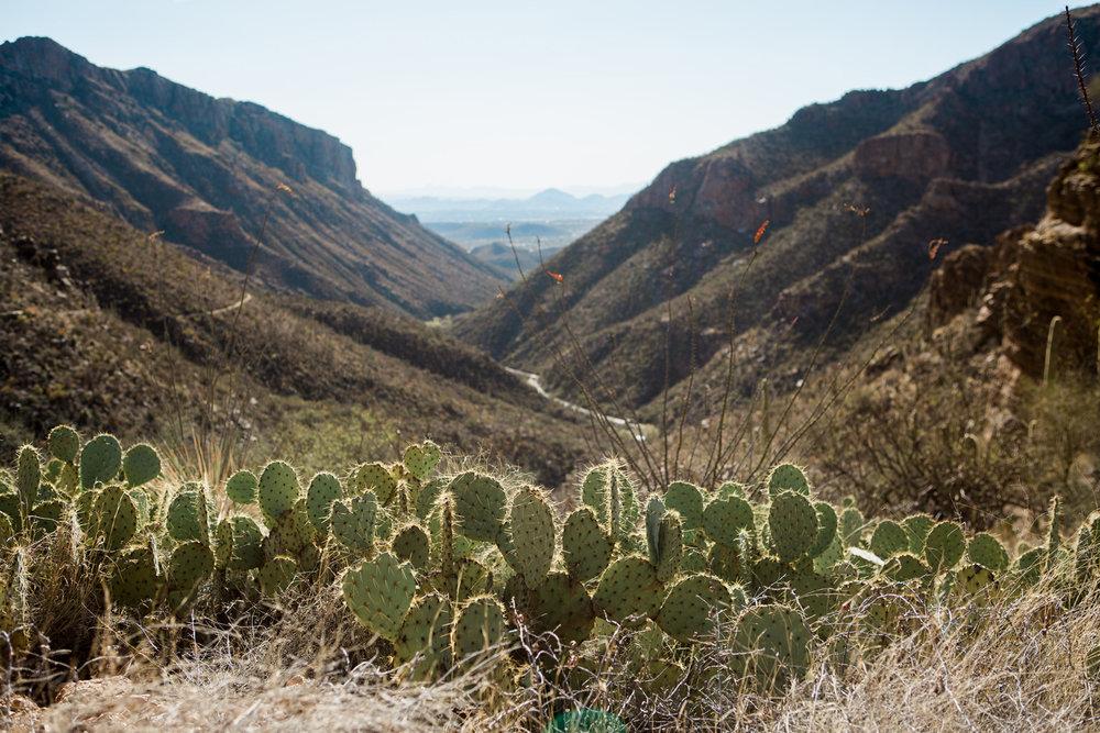 CindyGiovagnoli_Tucson_Arizona_Sabino_Canyon_Phone_Line_Trail_Uinta_Brewing_saguaro_cactus_desert_hiking-005.jpg