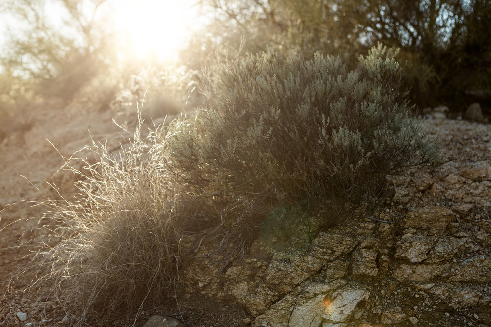 CindyGiovagnoli_Tucson_Arizona_Sabino_Canyon_Phone_Line_Trail_Uinta_Brewing_saguaro_cactus_desert_hiking-012.jpg
