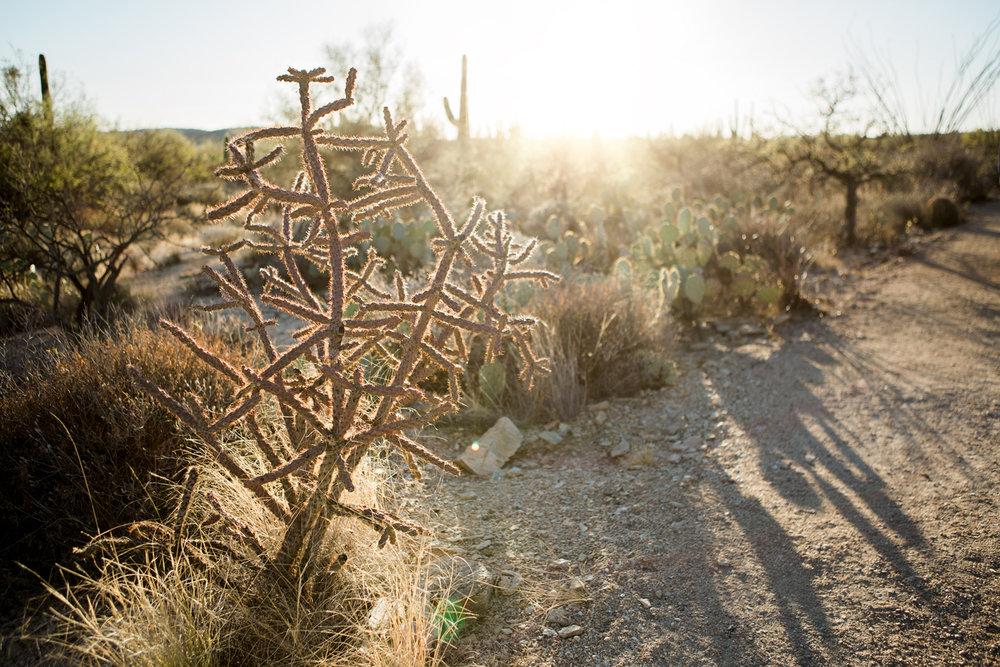 CindyGiovagnoli_Tucson_Arizona_Sabino_Canyon_Phone_Line_Trail_Uinta_Brewing_saguaro_cactus_desert_hiking-015.jpg