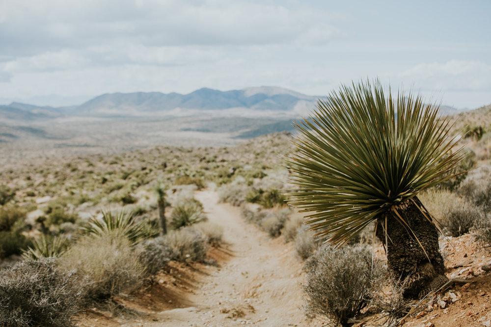 CindyGiovagnoli_Joshua_Tree_National_Park_California_Mojave_Desert_Cholla_Garden_Hidden_Valley_climbing_hiking_camping-001.jpg
