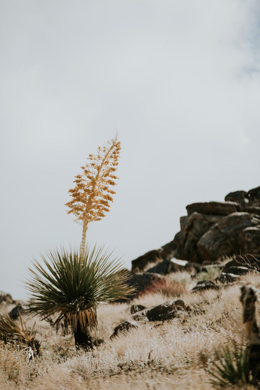 CindyGiovagnoli_Joshua_Tree_National_Park_California_Mojave_Desert_Cholla_Garden_Hidden_Valley_climbing_hiking_camping-004.jpg