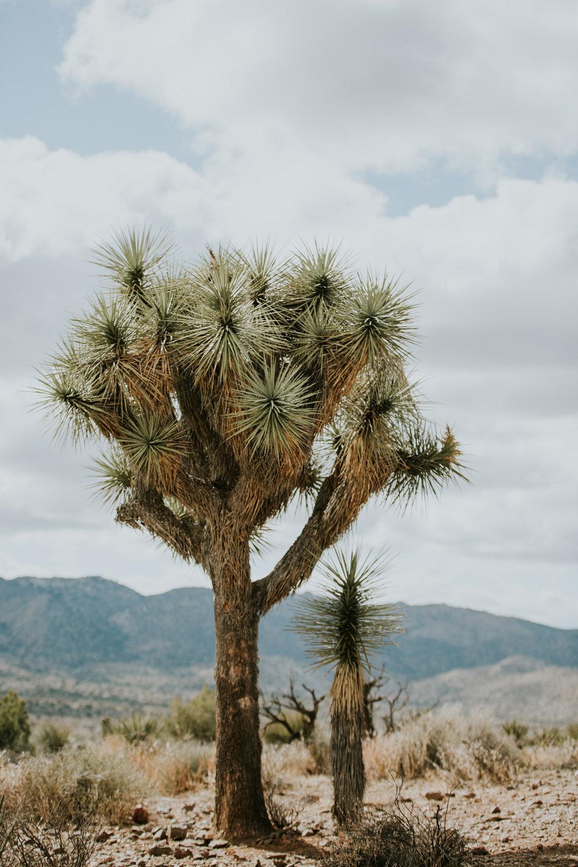 CindyGiovagnoli_Joshua_Tree_National_Park_California_Mojave_Desert_Cholla_Garden_Hidden_Valley_climbing_hiking_camping-005.jpg
