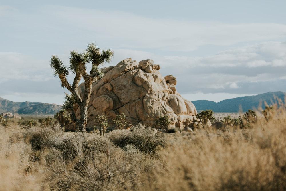CindyGiovagnoli_Joshua_Tree_National_Park_California_Mojave_Desert_Cholla_Garden_Hidden_Valley_climbing_hiking_camping-007.jpg