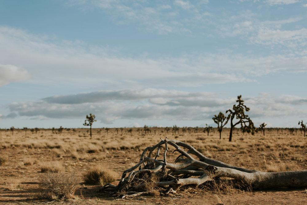 CindyGiovagnoli_Joshua_Tree_National_Park_California_Mojave_Desert_Cholla_Garden_Hidden_Valley_climbing_hiking_camping-008.jpg