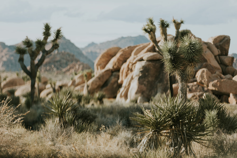 CindyGiovagnoli_Joshua_Tree_National_Park_California_Mojave_Desert_Cholla_Garden_Hidden_Valley_climbing_hiking_camping-014.jpg