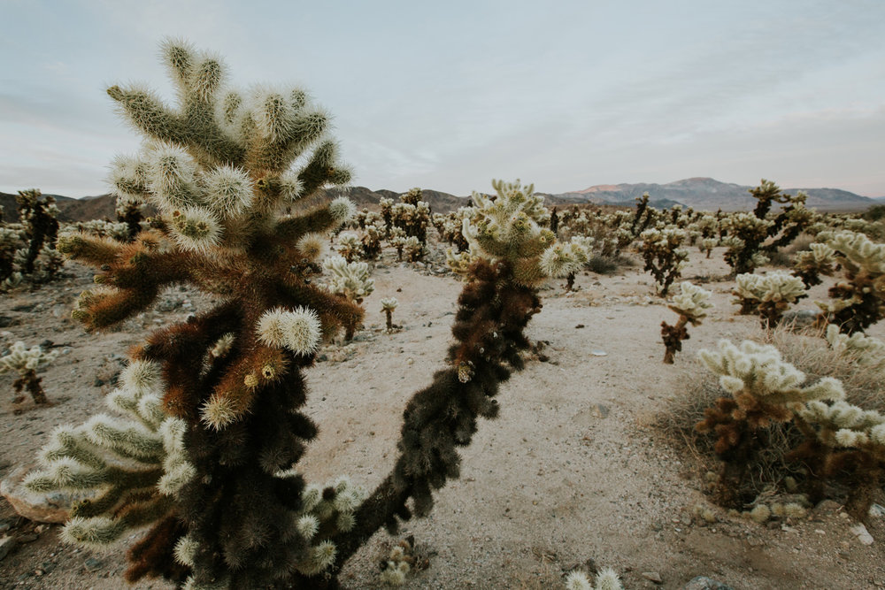CindyGiovagnoli_Joshua_Tree_National_Park_California_Mojave_Desert_Cholla_Garden_Hidden_Valley_climbing_hiking_camping-020.jpg