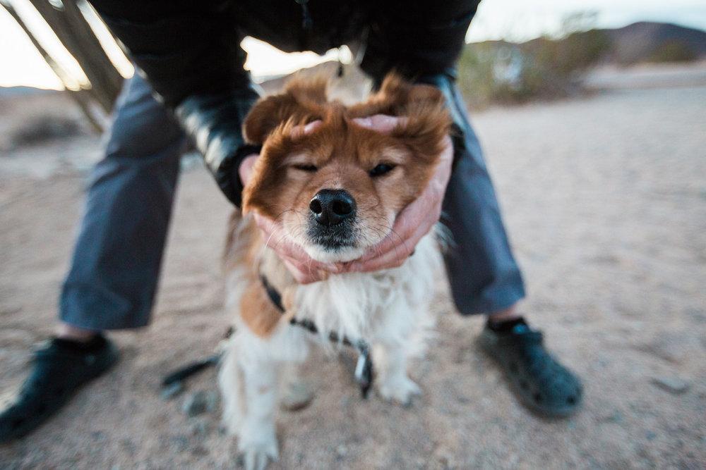 CindyGiovagnoli_Joshua_Tree_National_Park_California_Mojave_Desert_Cholla_Garden_Hidden_Valley_climbing_hiking_camping-022.jpg