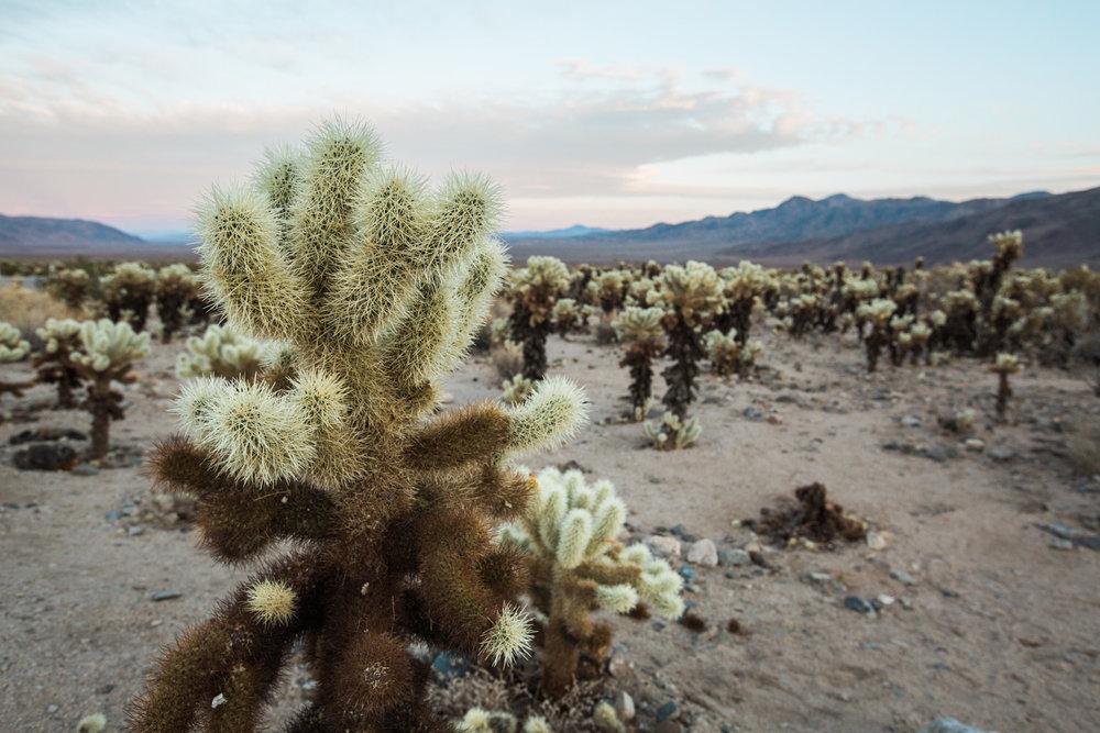 CindyGiovagnoli_Joshua_Tree_National_Park_California_Mojave_Desert_Cholla_Garden_Hidden_Valley_climbing_hiking_camping-030.jpg