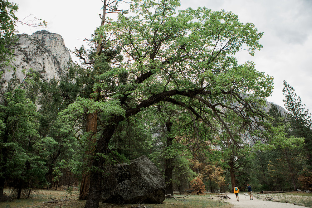 CindyGiovagnoli_Sedona_Arizona_Sequoia_Kings_Canyon_National_Park_California_giant_sequoia_trees_Kings_River_hiking_camping-007.jpg