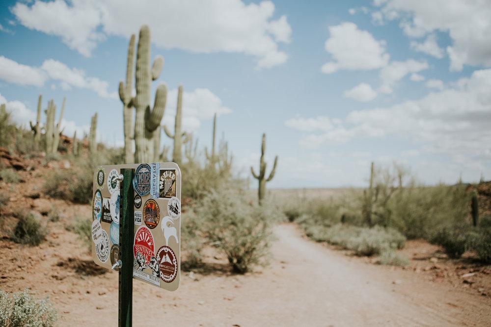 CindyGiovagnoli_Tucson_Arizona_MtLemmon_camping_Saguaro_desert_ocotillo-002.jpg