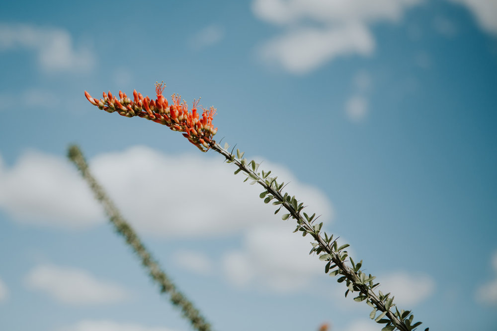 CindyGiovagnoli_Tucson_Arizona_MtLemmon_camping_Saguaro_desert_ocotillo-004.jpg