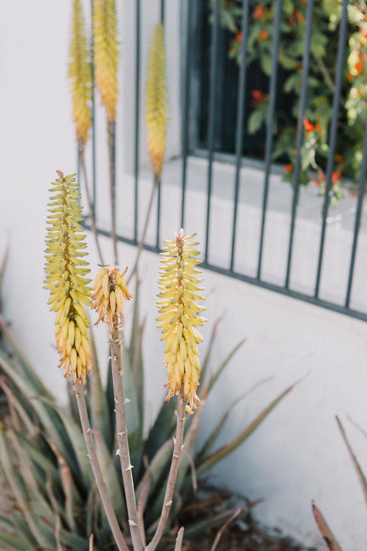 CindyGiovagnoli_Tucson_Arizona_MtLemmon_camping_Saguaro_desert_ocotillo-016.jpg
