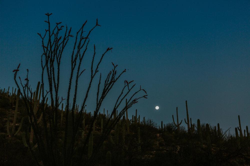CindyGiovagnoli_Tucson_Arizona_MtLemmon_camping_Saguaro_desert_ocotillo-019.jpg
