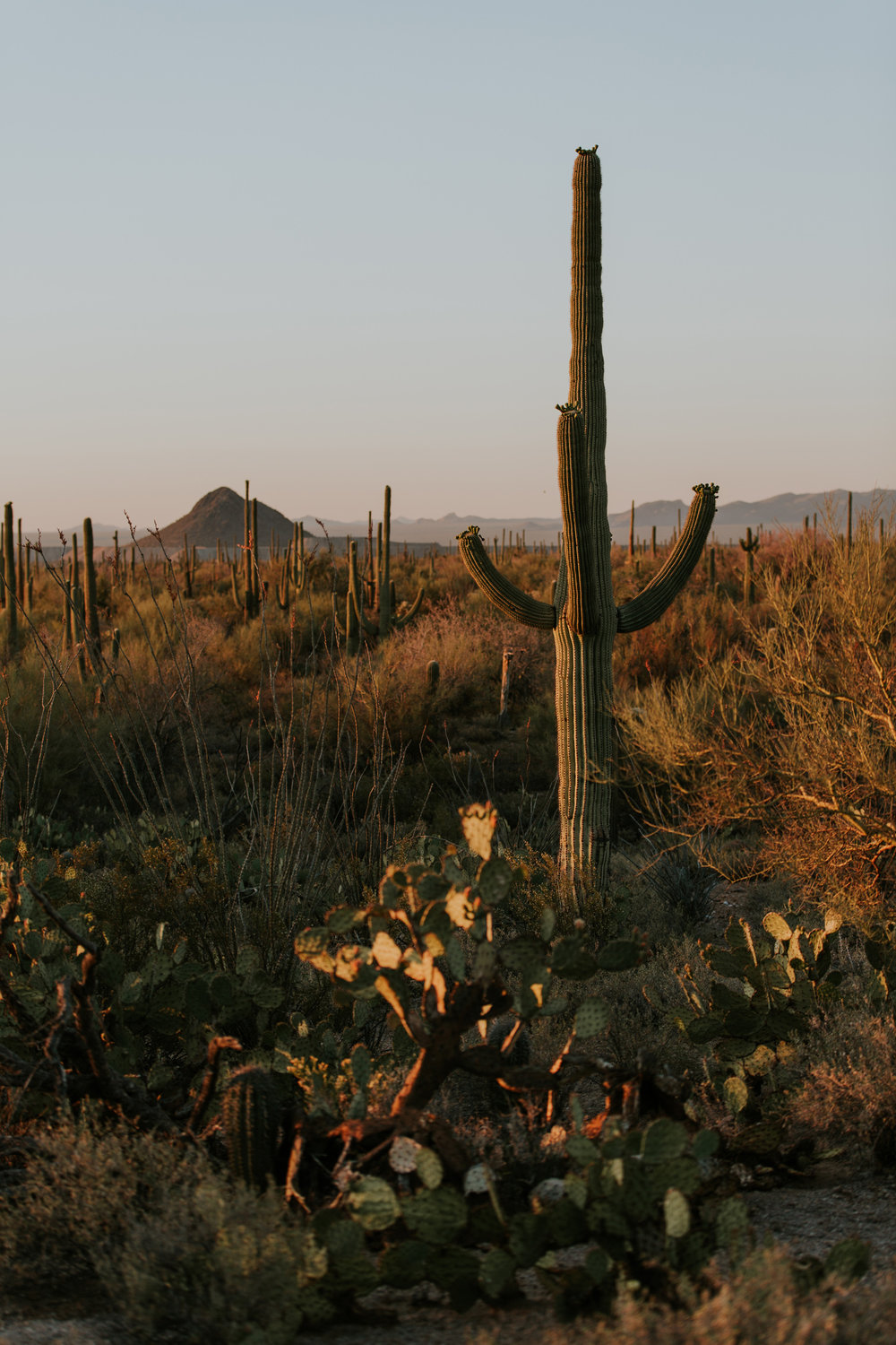 CindyGiovagnoli_Tucson_Arizona_Saguaro_National_Park_cactus_sunset_blooming_spring_sunset_petroglyphs_Native_American_indigenous-009.jpg