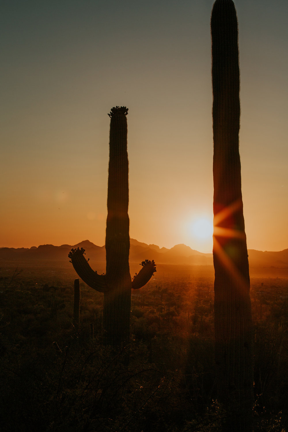 CindyGiovagnoli_Tucson_Arizona_Saguaro_National_Park_cactus_sunset_blooming_spring_sunset_petroglyphs_Native_American_indigenous-014.jpg