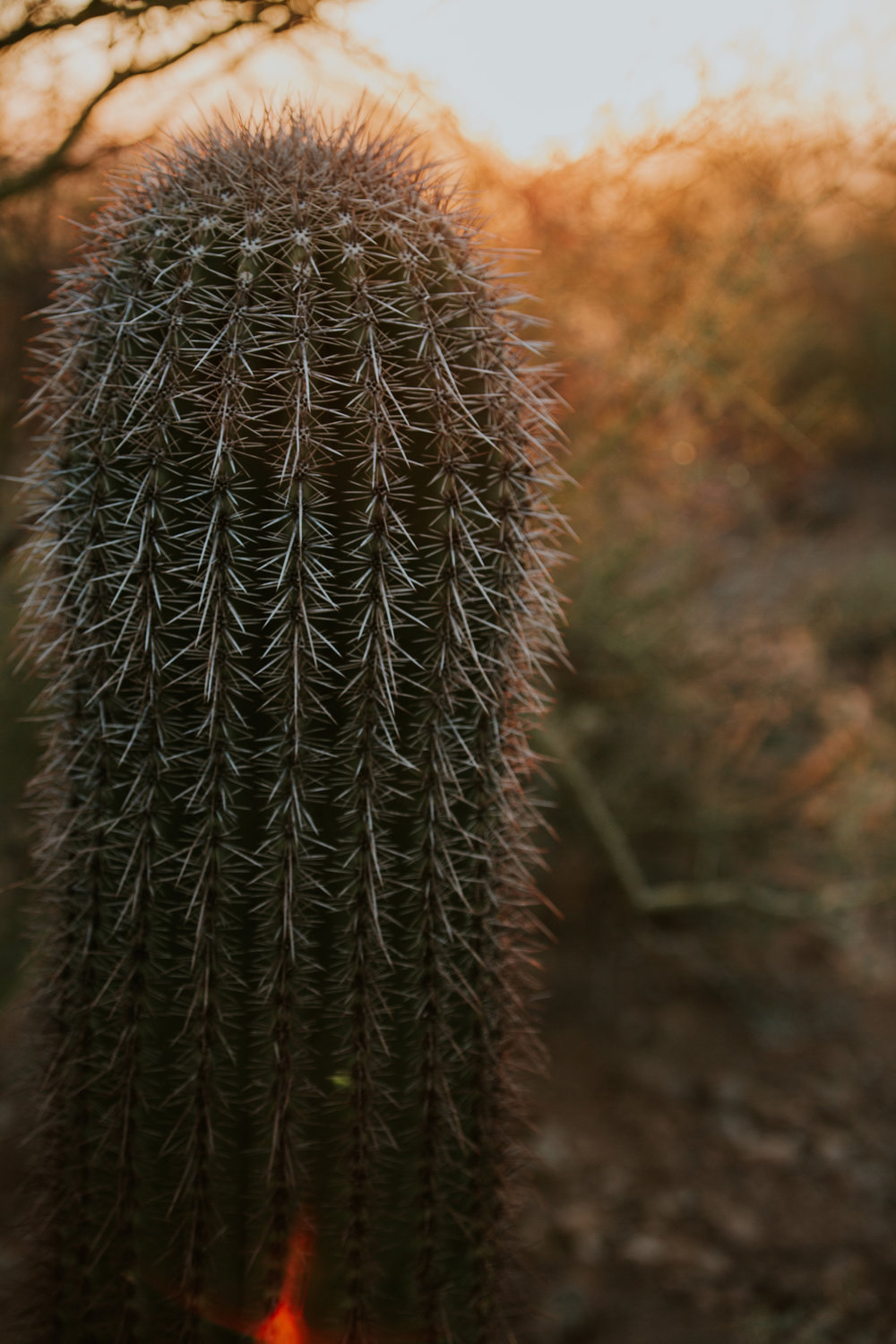 CindyGiovagnoli_Tucson_Arizona_Saguaro_National_Park_cactus_sunset_blooming_spring_sunset_petroglyphs_Native_American_indigenous-015.jpg