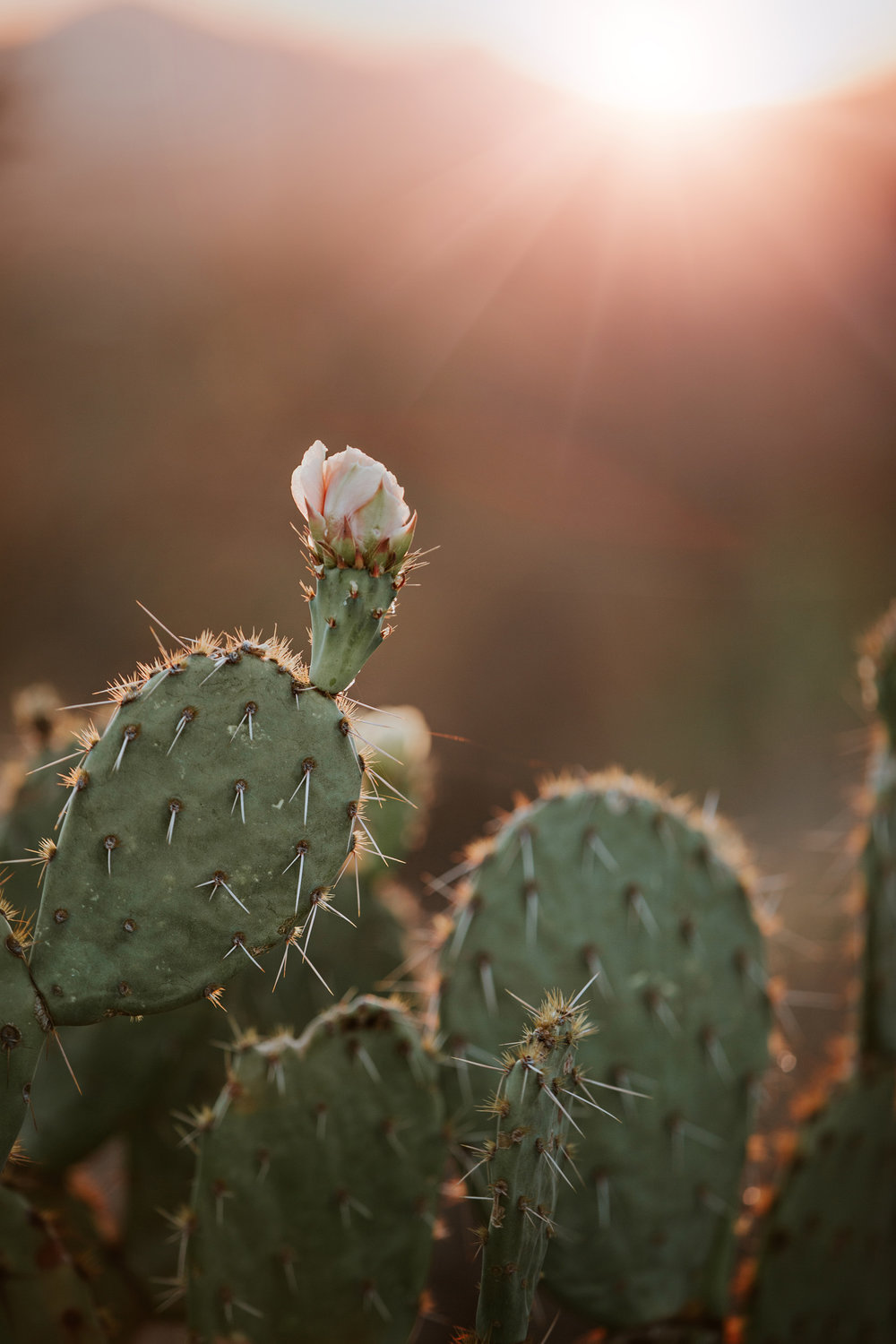 CindyGiovagnoli_Tucson_Arizona_Saguaro_National_Park_cactus_sunset_blooming_spring_sunset_petroglyphs_Native_American_indigenous-018.jpg