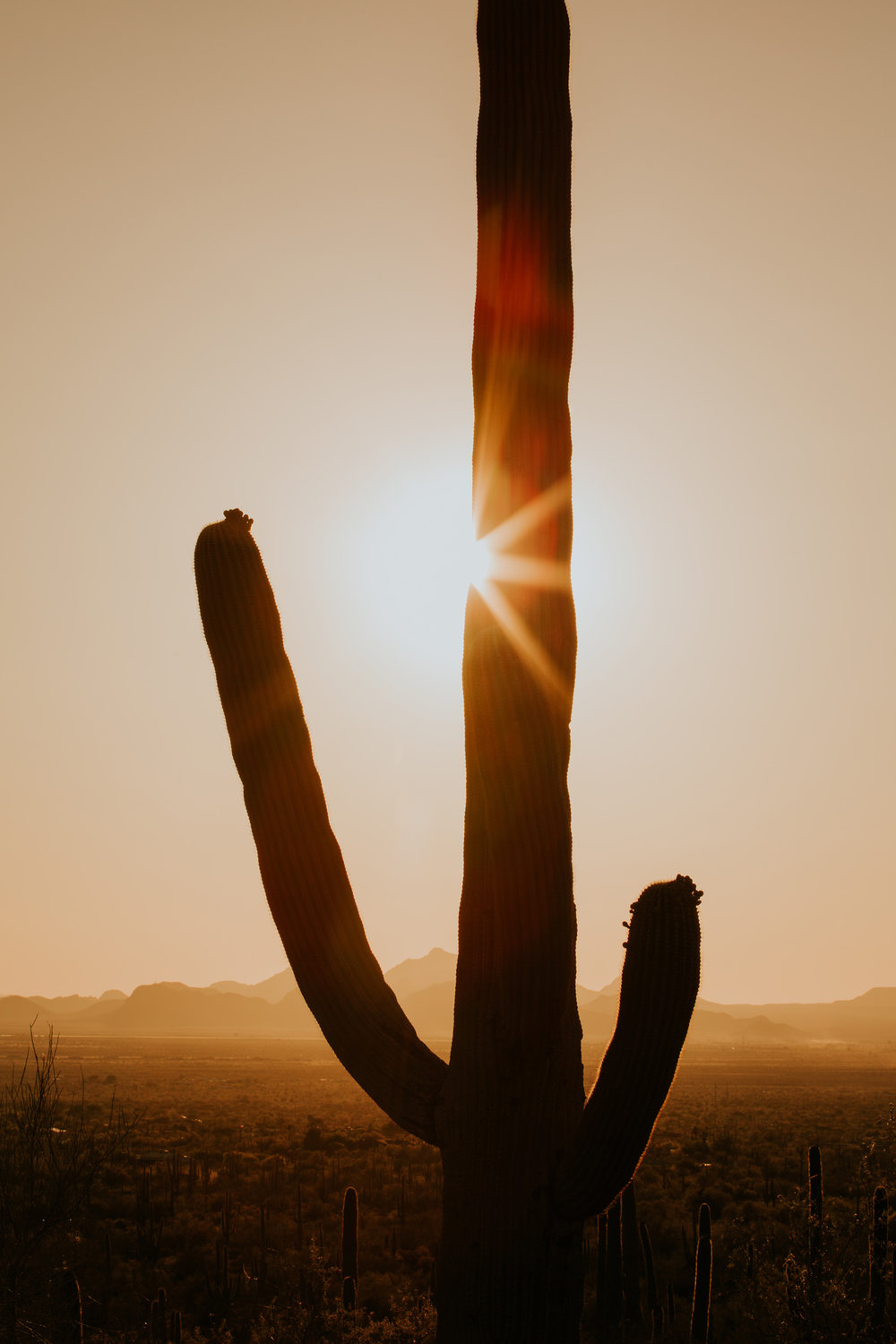 CindyGiovagnoli_Tucson_Arizona_Saguaro_National_Park_cactus_sunset_blooming_spring_sunset_petroglyphs_Native_American_indigenous-023.jpg