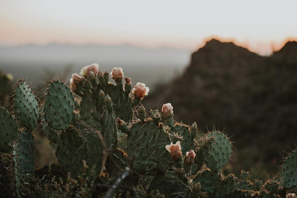 CindyGiovagnoli_Tucson_Arizona_engagement_lifestyle_portrait_Airstream_Excella_travel_trailer_camper_Saguaro_National_Park-048.jpg