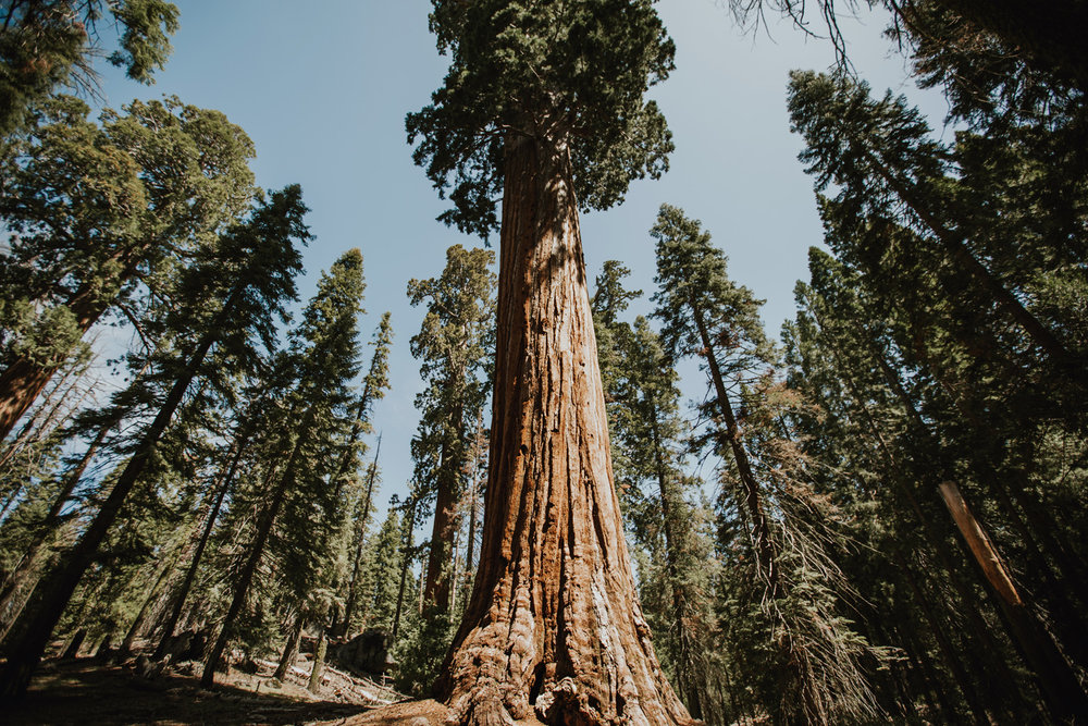 CindyGiovagnoli_California_Sequoia_Kings_Canyon_National_Park_trees_travel_road_trip-001.jpg