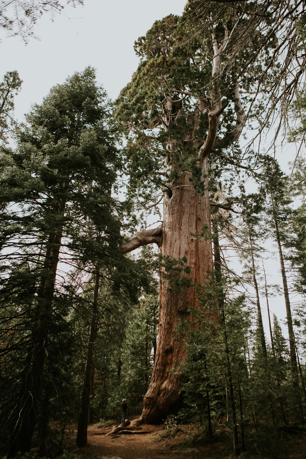 CindyGiovagnoli_California_Sequoia_Kings_Canyon_National_Park_trees_travel_road_trip-014.jpg
