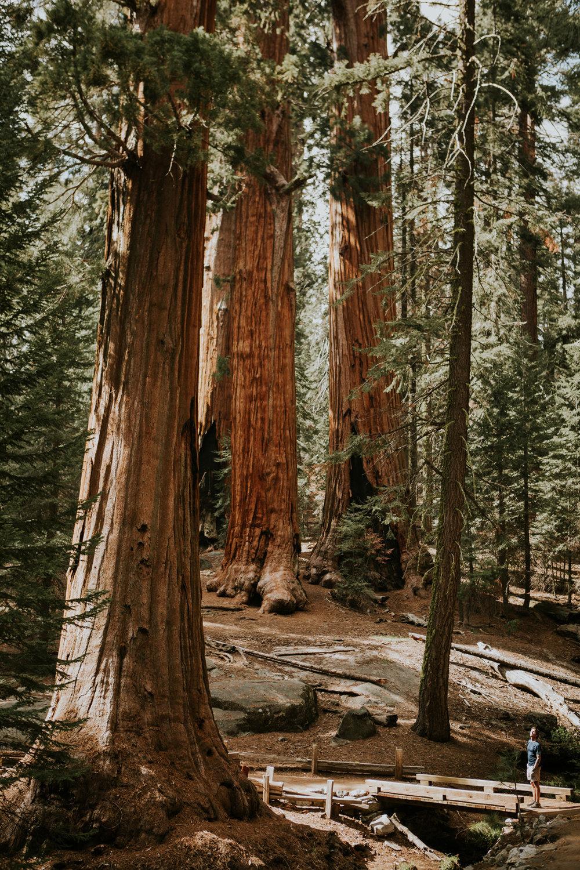 CindyGiovagnoli_Sequoia_Kings_Canyon_National_Park_California_bear_camping_roadtrip_travel-005.jpg