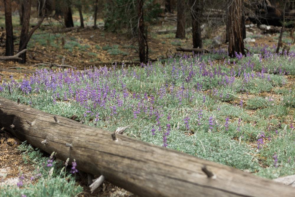 CindyGiovagnoli_Sequoia_KingsCanyon_National_Park_California_forest_fire-015.jpg