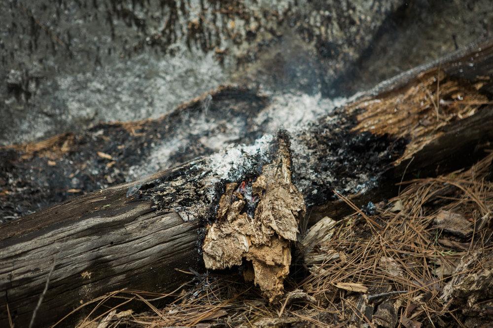 CindyGiovagnoli_Sequoia_KingsCanyon_National_Park_California_forest_fire-023.jpg