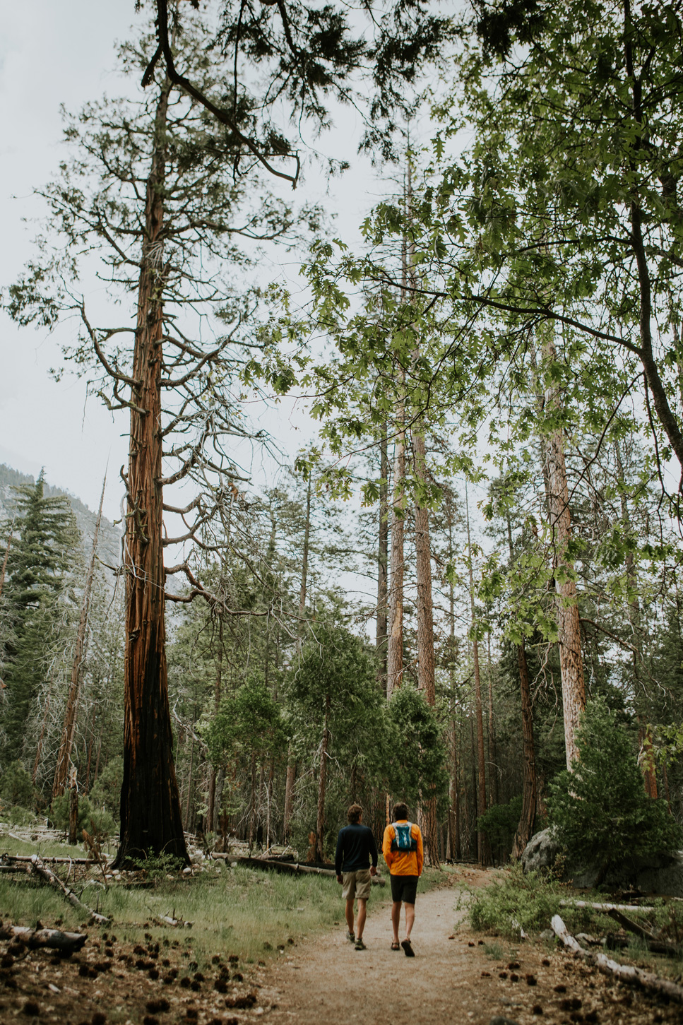 CindyGiovagnoli_Sequoia_KingsCanyon_National_Park_California_forest_fire-025.jpg