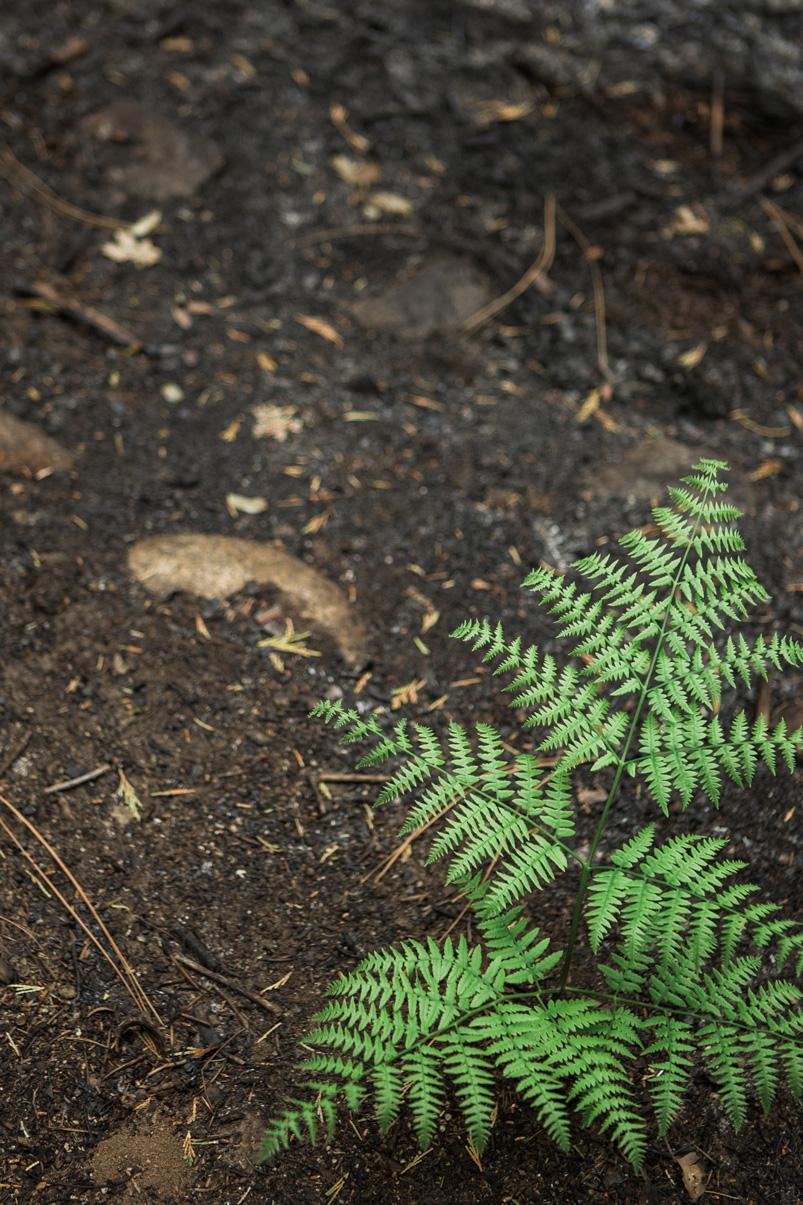 CindyGiovagnoli_Sequoia_KingsCanyon_National_Park_California_forest_fire-031.jpg