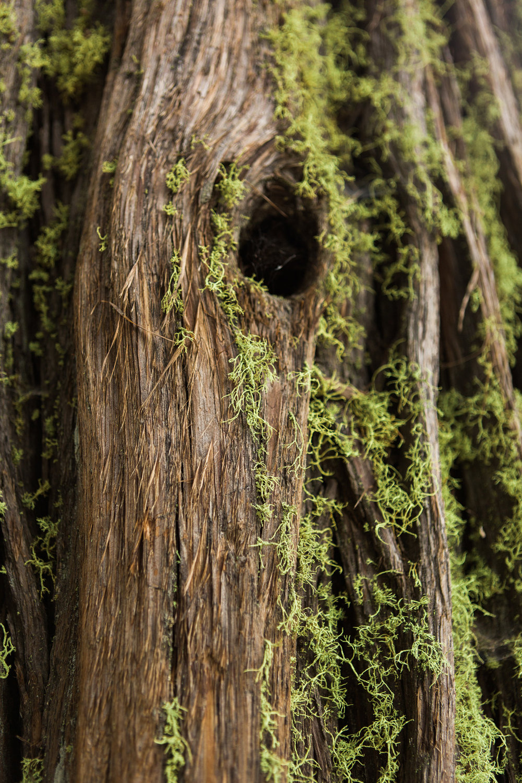 CindyGiovagnoli_Sequoia_KingsCanyon_National_Park_California_forest_fire-032.jpg