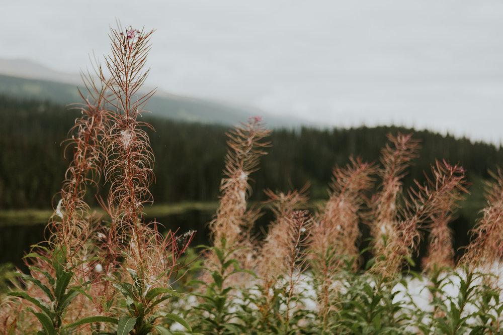 CindyGiovagnoli_BritishColumbia_Yukon_Alaska_roadtrip_AlCan_Alaskan_Highway_truck_camping-022.jpg