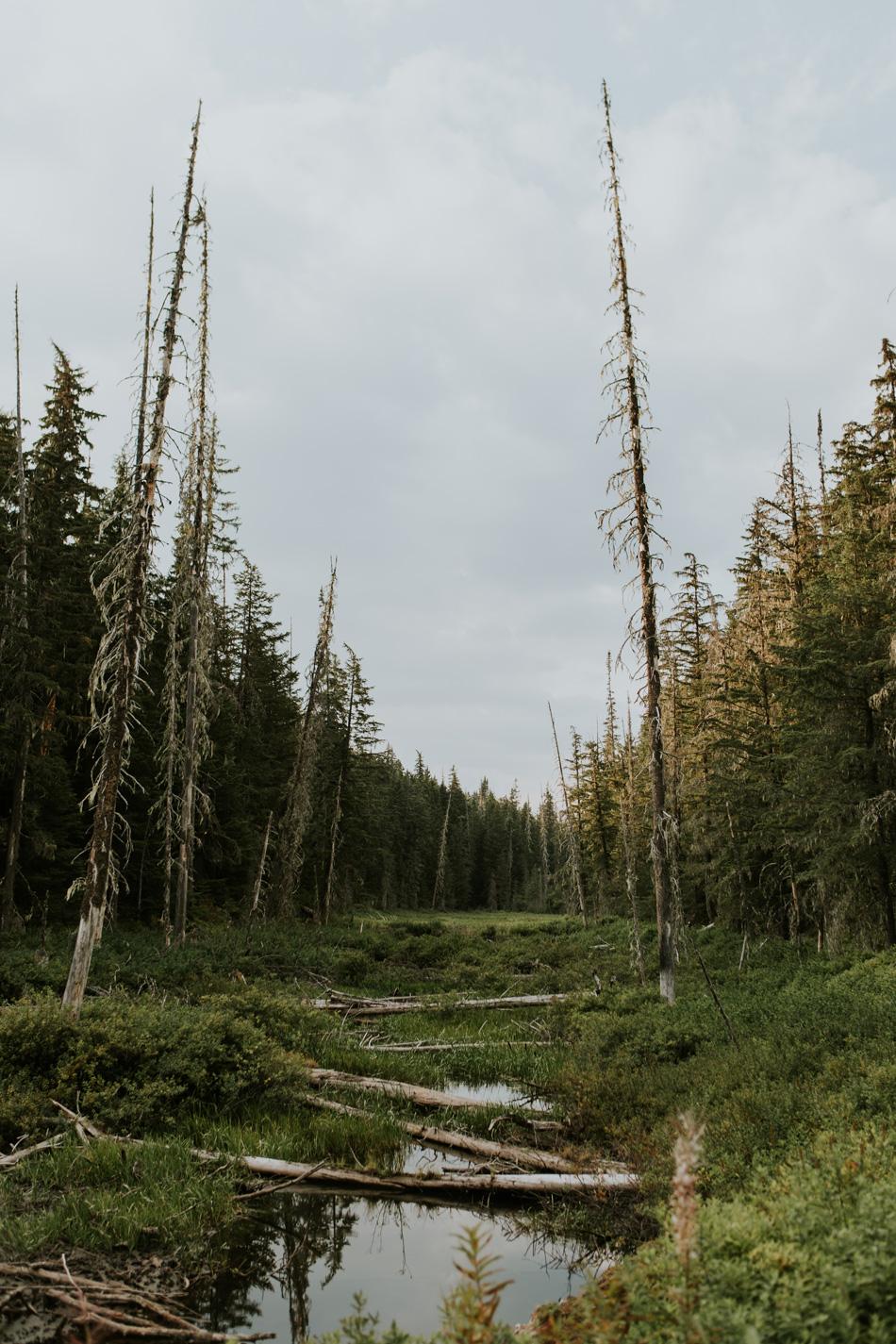 CindyGiovagnoli_BritishColumbia_Yukon_Alaska_roadtrip_AlCan_Alaskan_Highway_truck_camping-028.jpg