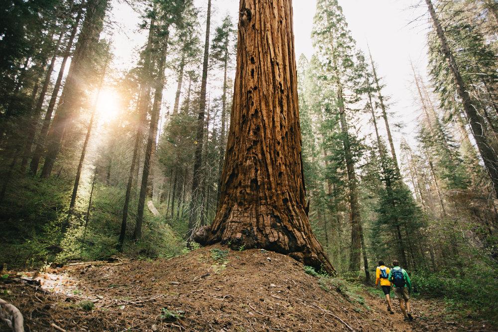 CindyGiovagnoli_Sequoia_Kings_Canyon_National_Park_spring_hiking_dogwood-001.jpg