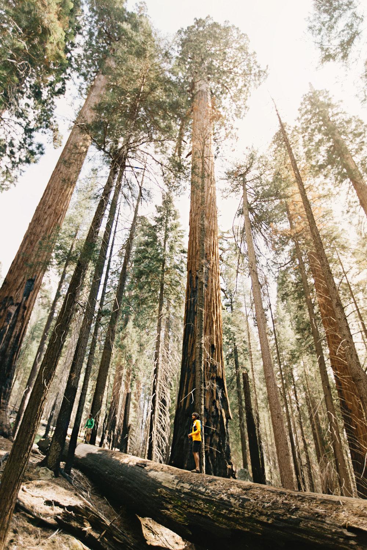 CindyGiovagnoli_Sequoia_Kings_Canyon_National_Park_spring_hiking_dogwood-002.jpg